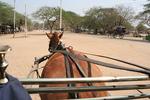 horseview.jpg